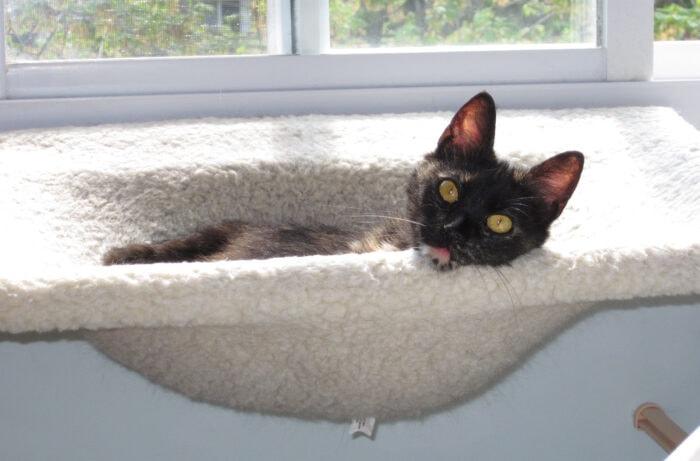Ruby-kitten-hammock