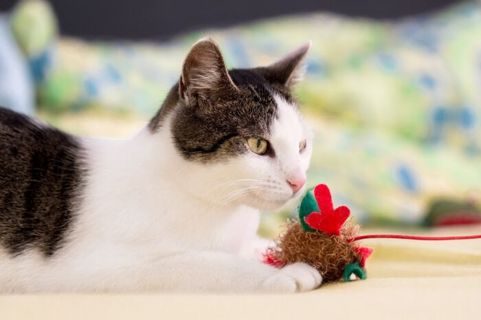 cat-playing-toy