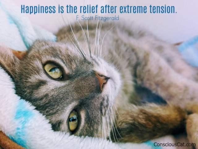 cat-relief