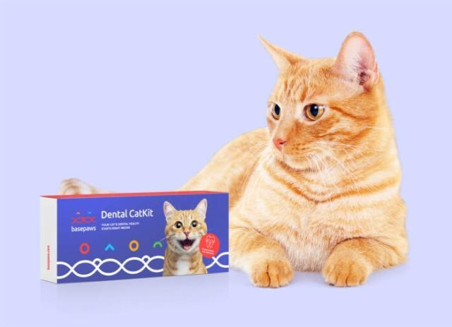 cat-dental-health-test
