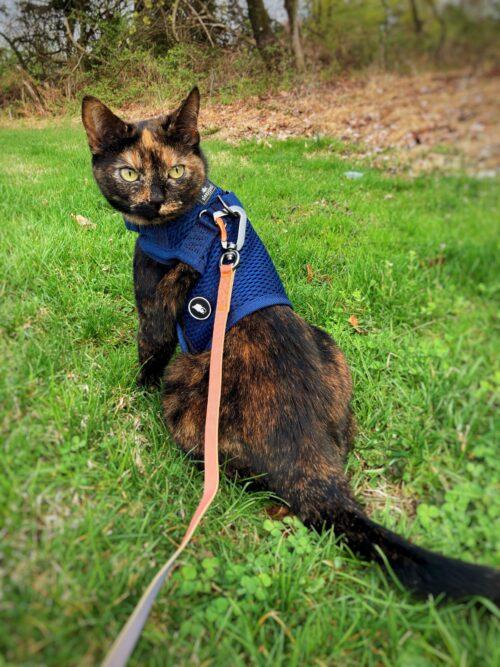 tortoiseshell-cat-grass