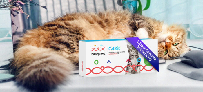 basepaws-cat-dna-test