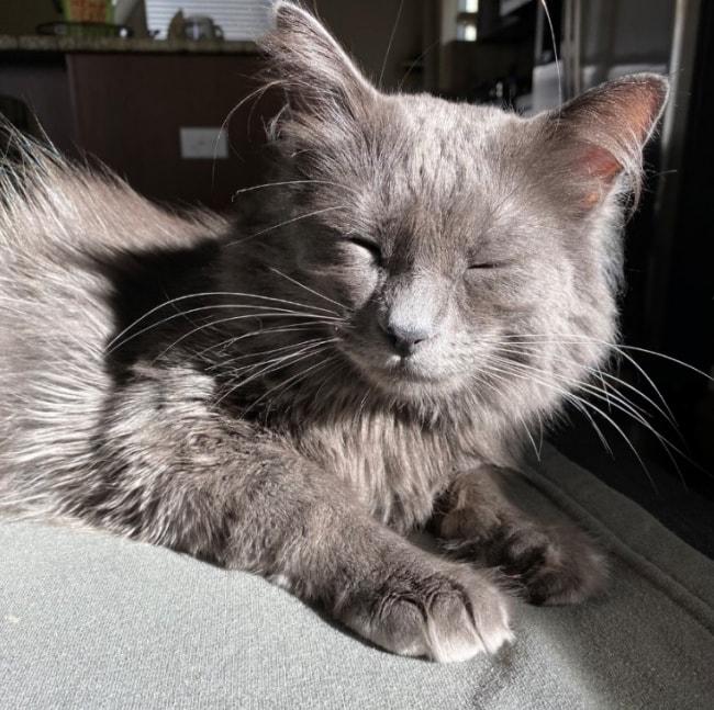 cat-sunshine-bliss