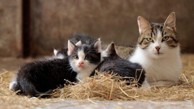 cat-family