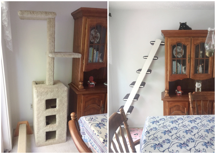 cat-ladder-cat-tree