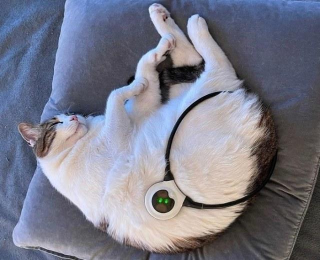 assisi-loop-cat-sleeping