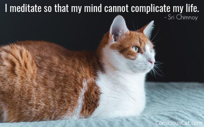 cat-meditating