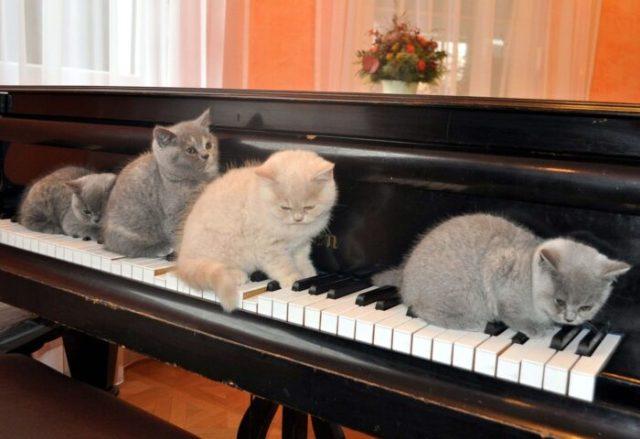kittens-piano