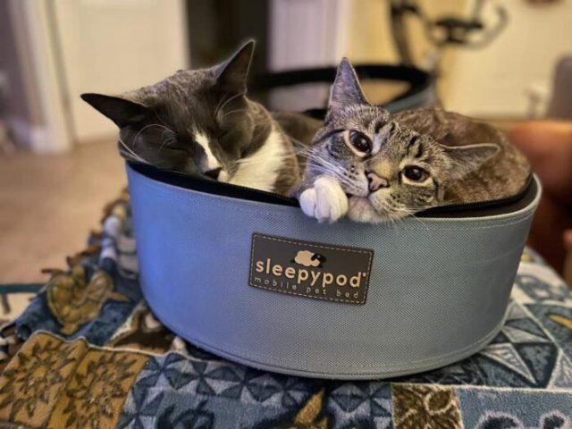 sleepypod-two-cats