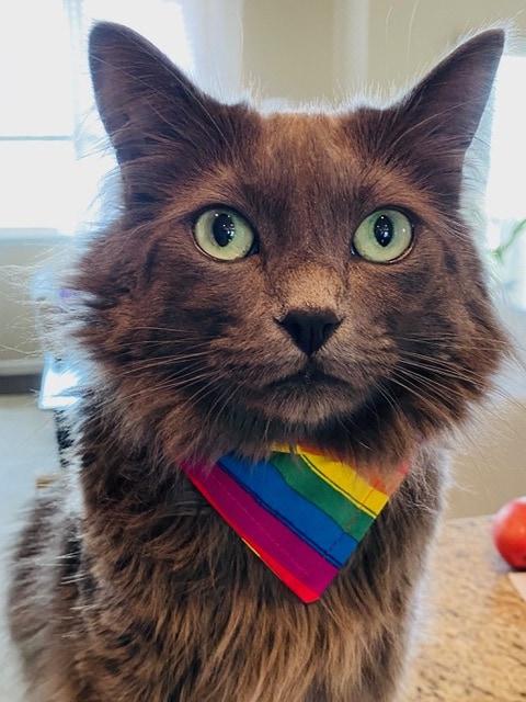 grey-cat-pride-bandanna