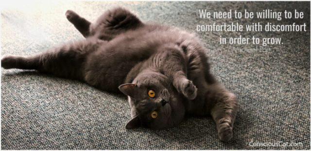 cat-stretch-comfort