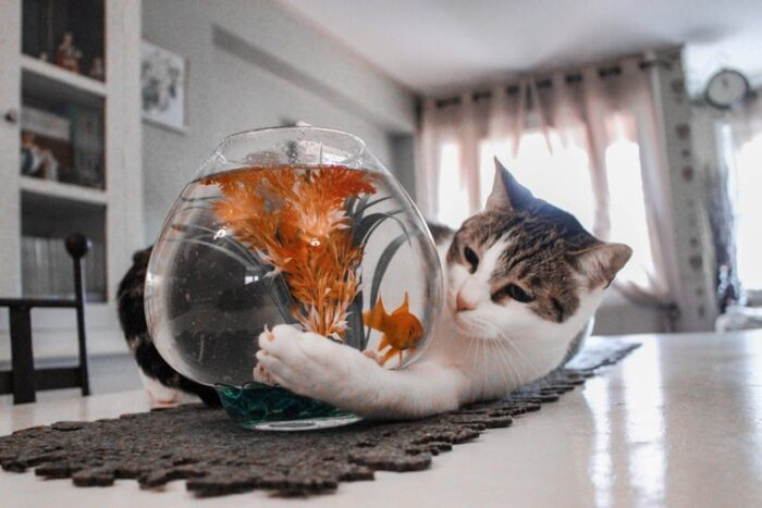 cat-with-fish