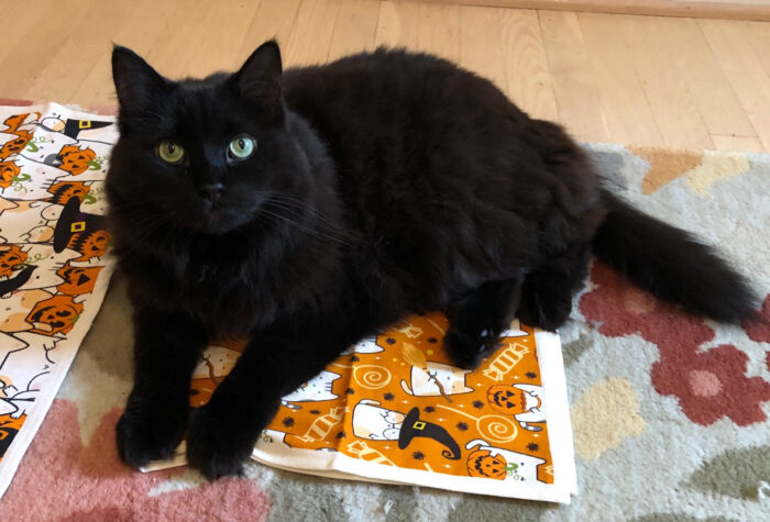 halloween-cat-towels