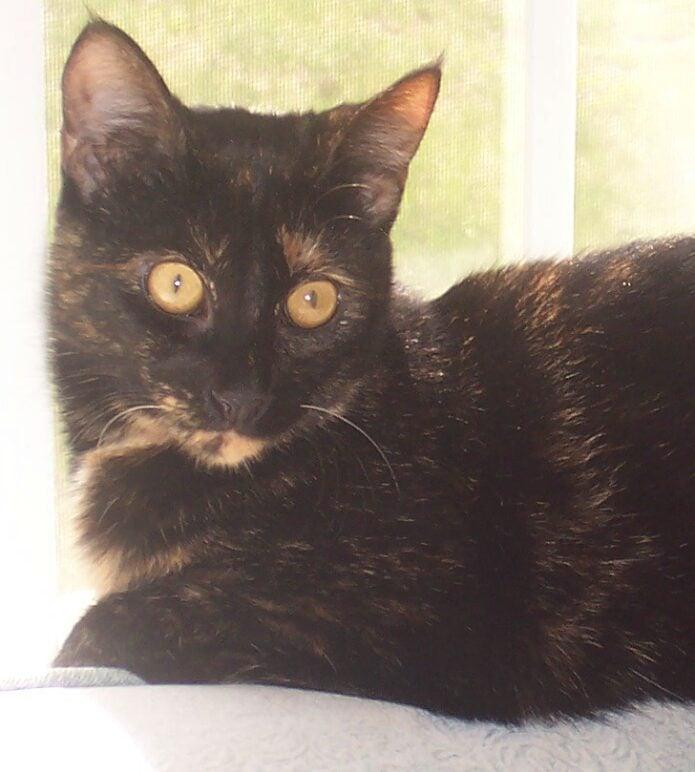 Allegra-kitten