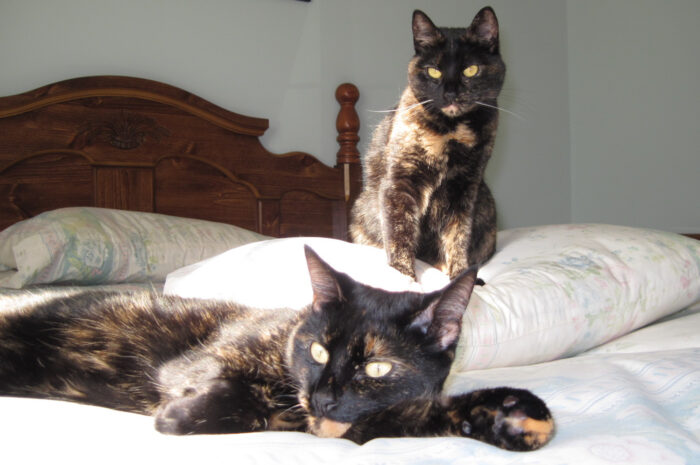 tortoiseshell-cats-bed
