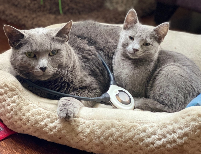 assisi-loop-cats