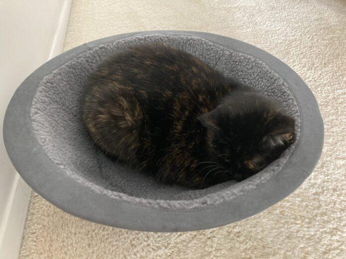 Hepper-nest-bed-sleeping-cat