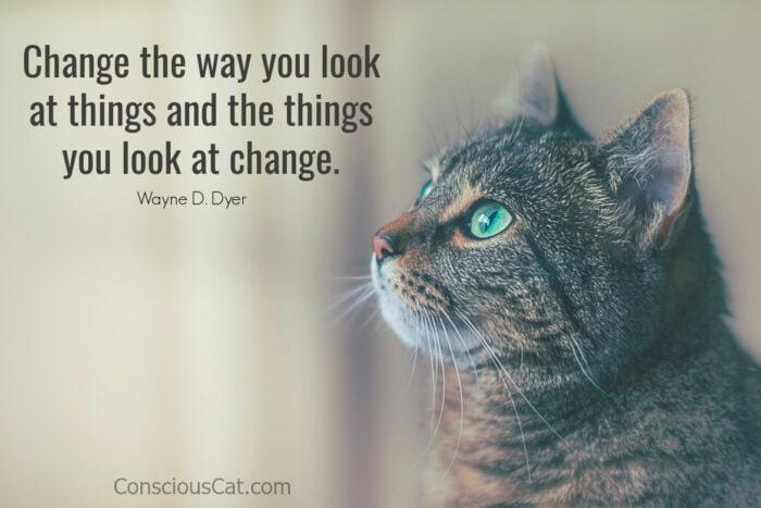 cat-looking-up