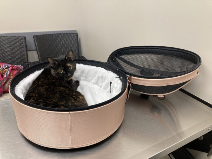 Sleepypod-mobile-pet-bed-veterinary-dentist