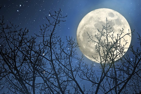Full Moon – February 19, 2019 – Conscious Community Magazine