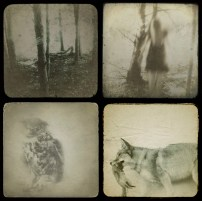 susan tuttle examples of her iphoneography 'woodland' series
