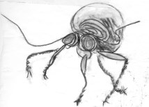 beetle sketch