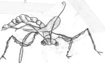 praymantis sketch
