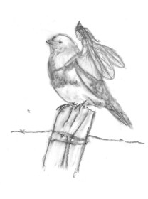 BIrd_on_fence_sketch
