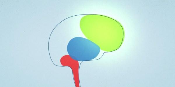 Brain State Model - Conscious Discipline