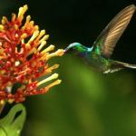 The Magic of Pollination: Stunning Time-Lapse Photography