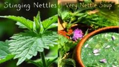Nettles-med
