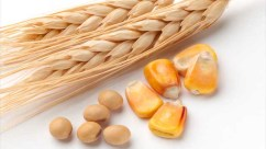 corn, wheat, and soy
