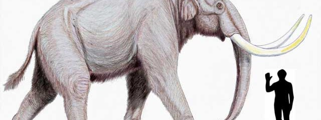 Post Ice-Age Extinctions Of Large Mammals Linked To Humans, Not Climate Change