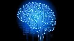 brain mind
