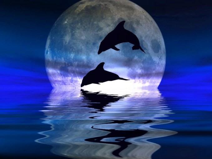 dolphins_moonlight