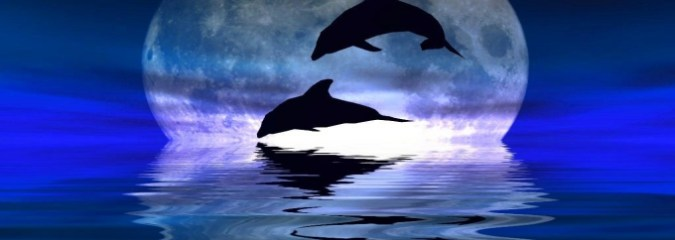 "India Declares Dolphins To Be ""Non-Human Persons"", Dolphin Shows Banned"
