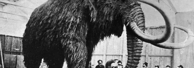Woolly Mammoth Cloning War: Scientists Are Divided Over the Ethics Of Attempting To Revive Extinct Mammal