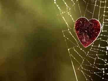 heart-cobwebs