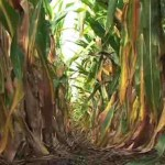 Look What This No-Till Method is Doing for Mid-Scale Farmers