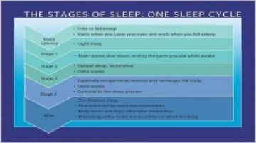 Sleep cycle chart courtesy of http://www.fitandfabforlife.us