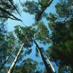 Good GREEN News: Global Forest Loss Reversing, Despite Large-Scale Deforestation