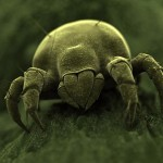 Are Dust Mites and Germs Causing Your Sickness?