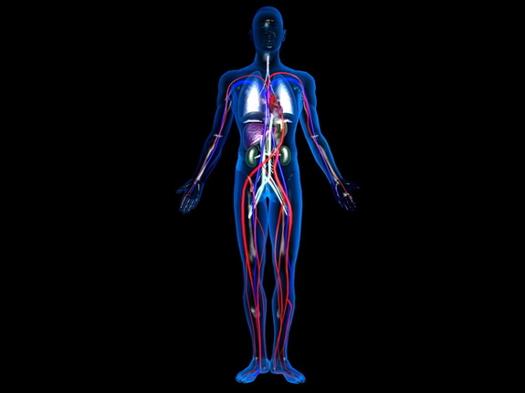 Human_blood_vessel_01-compressed