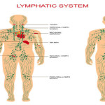 Newfound Brain/Lymph System Link May Lead to Better Health