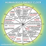 How and WHY You Should Plan Your Day Around Your Human Body Energy Clock