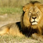 3 Things You Should Know About Cecil the Lion