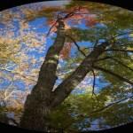 Becoming an Earth Keeper
