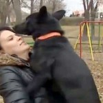 Dog Walks 200 MILES To Find The Woman Who Nursed It Back To Health
