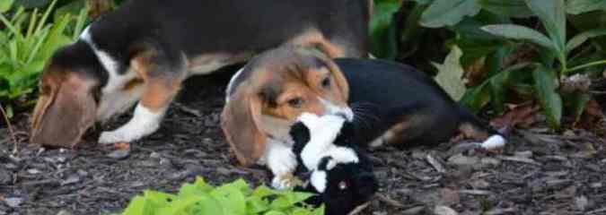 First Puppies Born By In Vitro Fertilization