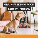 Paleo Dog: Does Grain-Fre